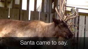 rudolph red nosed reindeer song lyrics reindeer