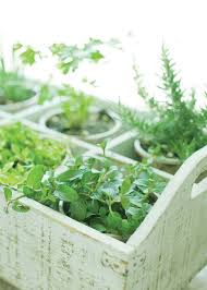 plants that keep mosquitoes away 6 plants that repel insects gardening mother earth living