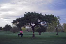 artists try to save city park golf course trees from denver