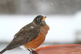 New York birds images Don 39 t forget water for birds in the winter the national jpg