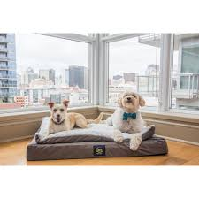 pillow top dog bed serta orthopedic ultra plush pillowtop dog bed free shipping today