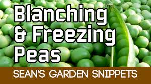 cooking tips for vegetables how to blanch and freeze peas youtube