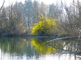 free images tree sw wilderness leaf bloom lake river