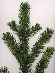 100 canaan fir christmas tree fresh cut christmas trees