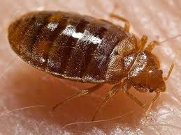 lights out bed bug killer chemical mix attracts and kills bedbugs business insider
