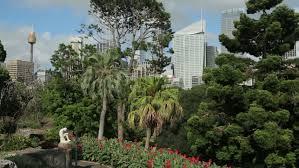 sydney nsw australia february 02 2014 botanical gardens and
