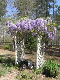alabama native plants that beautiful purple plant blog archives