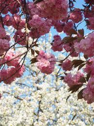 free images branch leaf petal bloom food produce