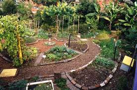 the 25 best permaculture garden ideas on pinterest permaculture