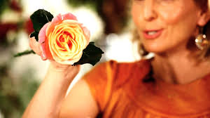How To Make Roses Live Longer In A Vase How To Make Roses Open Faster Wedding Flowers Youtube