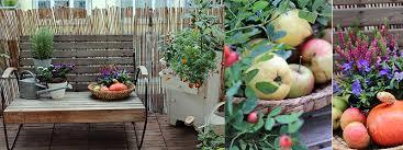 garten balkon herbst am balkon garten fräulein der garten