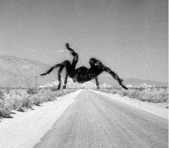 best spider movies of all time killer tarantulas on film top2040