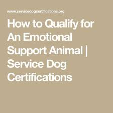 Comfort Pet Certification Best 25 Emotional Support Animal Ideas On Pinterest Service Dog