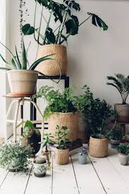 Interior Garden Plants by 306 Best Plants For Home Decor Images On Pinterest Plants