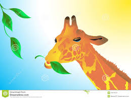 giraffe eating leaves clipart clipartxtras