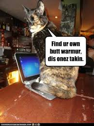 Cat Laptop Meme - lolcats computer page 12 lol at funny cat memes funny cat