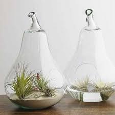 pear terrarium u2013 design sponge