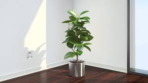 these plants are oxygen bombs u2013 have at least one of them to clean
