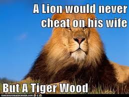 Lion Meme - lion meme by nickelbackloverxoxox on deviantart