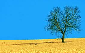free yellow field and tree backgrounds for powerpoint nature ppt