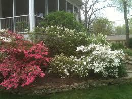 Garden Shrubs Ideas Landscaping Trees And Shrubs Ideas Design Decors Small Arafen