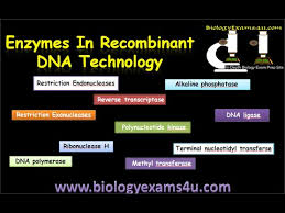 what are restriction enzymes definition types and cut patterns