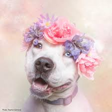Flower Power Nyc - flower power pit bulls of the revolution u0027 is a whimsical photo