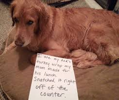 pets who thanksgiving photos