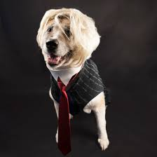 diy presidential dog costumes wholesale halloween costumes blog