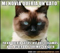Gato Meme - mi novia quiere un gato humor pinterest animales and humor