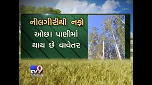 dhartiputra gujarat farmers switch to highly profitable