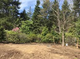 transplanting native plants transplanted plants make a garden maria von brincken landscape