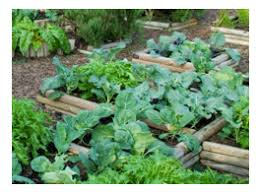 how to build a raised bed for vegetable gardening u2014 the veggie lady