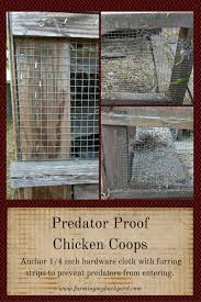 predator proof chicken coops a simple way to protect your flock
