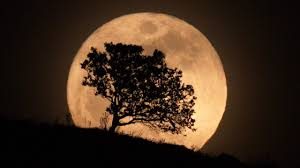 in search of moon trees david reneke space and astronomy
