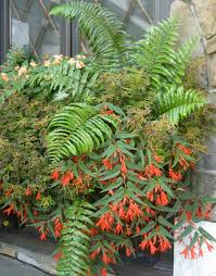 barrel planter ideas home decorations insight