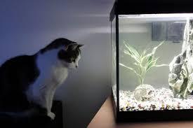 how long should aquarium lights be left on