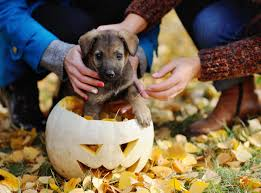 halloween background puppy 17 halloween memes to get you in the spooky spirit