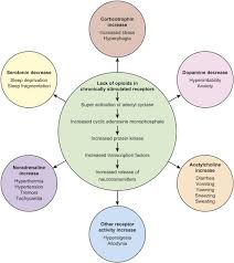 neonatal abstinence syndrome state of the art review articles