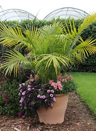 native pot plants container combo ideas from costa farms costa farms