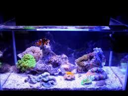 fluval edge marine light fluval edge 23l 6 gal nano reef tank youtube