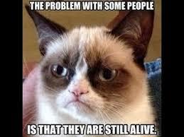 Best Memes 2014 - grumpy cat memes 2 2014 animal memes youtube