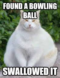 Flying Cat Meme - flying cat ball google search memes pinterest memes