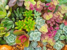 why you should have a succulent in your life