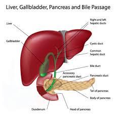Instrument Used To Examine Interior Of Bladder Gallbladder Cancer Huntsman Cancer Institute University Of