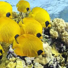 download wallpaper 2048x2048 underwater ocean fish new ipad air