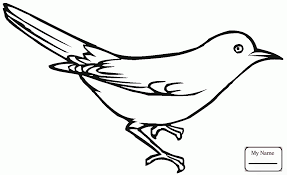 coloring pages for kids birds jay blue jay on a branch coloring7 com