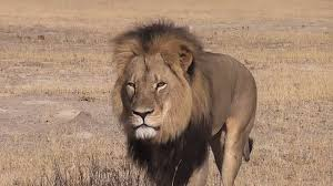 curriculum vitae template journalist beheaded youtube video walter palmer hunter who killed cecil the lion gives first interview