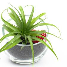 baby egg modern air plant terrarium diy kit juicykits com