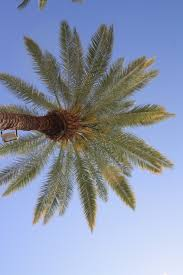 79 best palm springs scenic images on pinterest palms palm